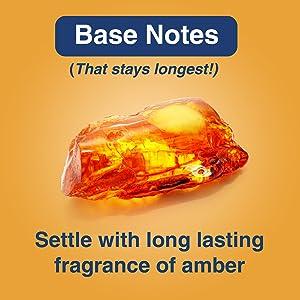 Base Notes Amber
