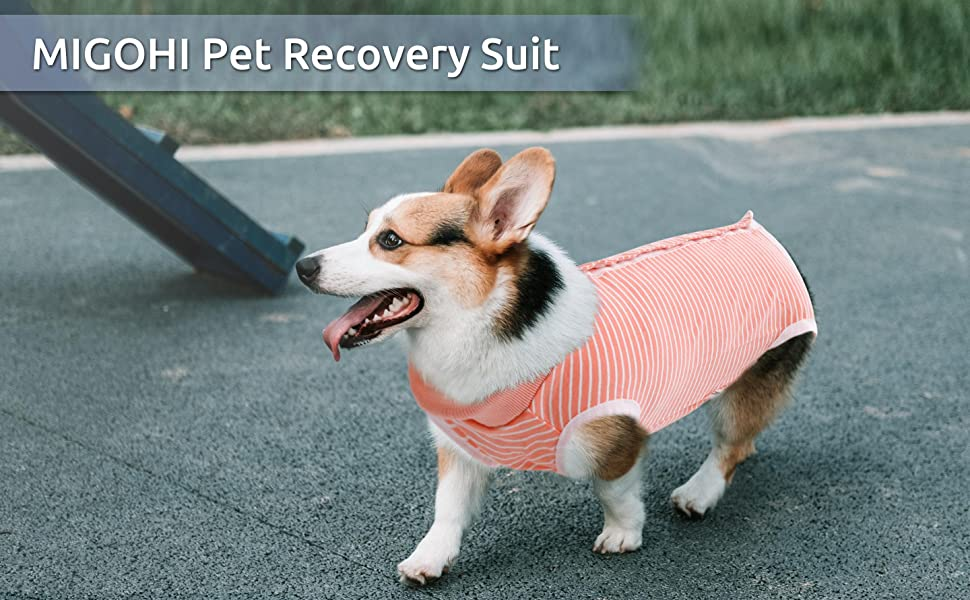 Pet recovery suit for male female dog