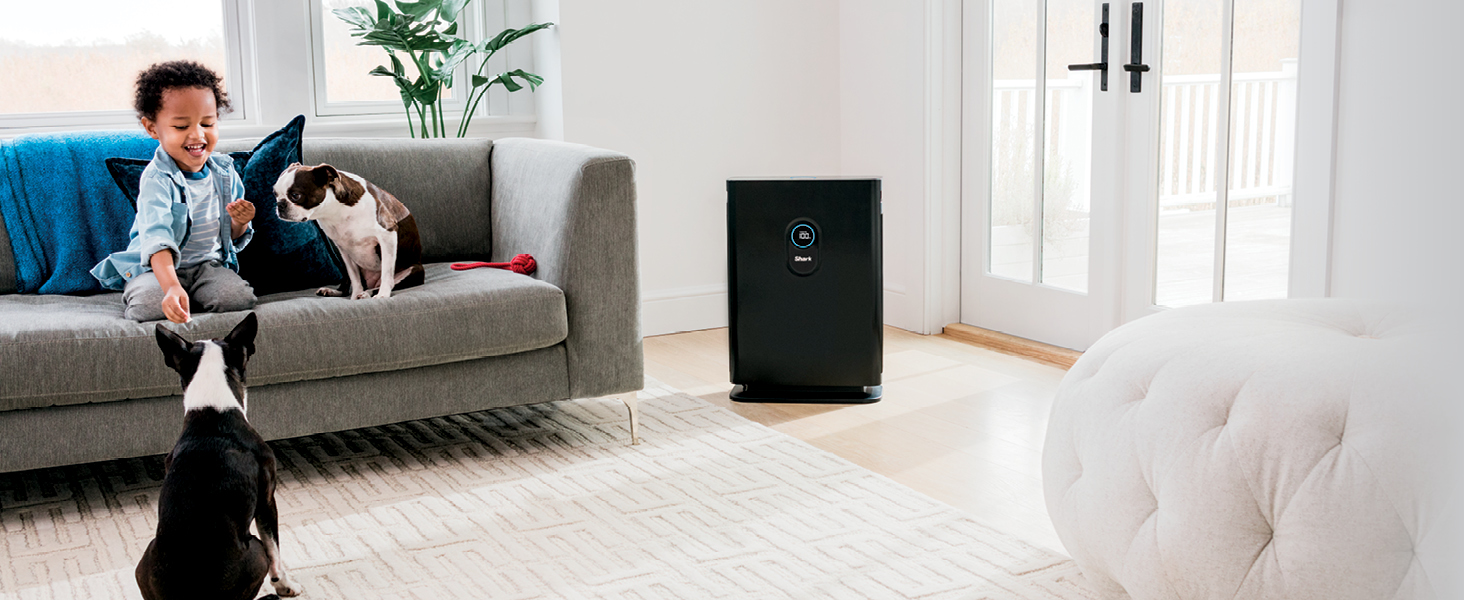 child playing with dogs and air purifier in room
