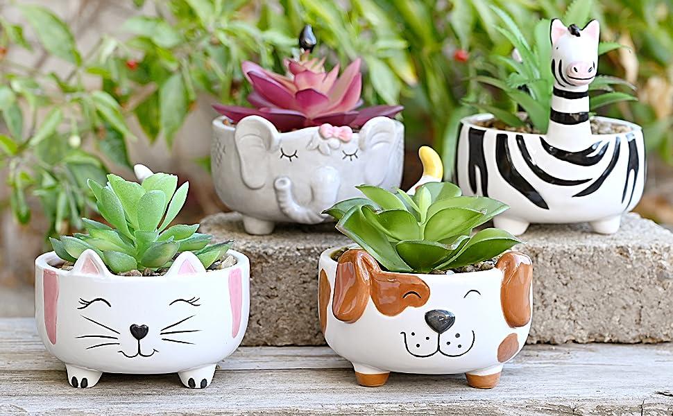 Succulent Plant Pots