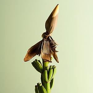 Banana flower antioxidant magnesium redness reduction