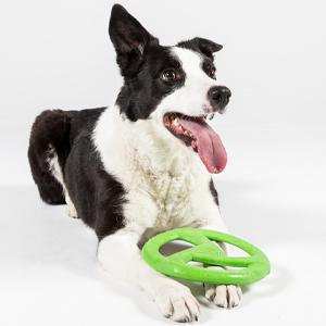 Dog with green WO Disc
