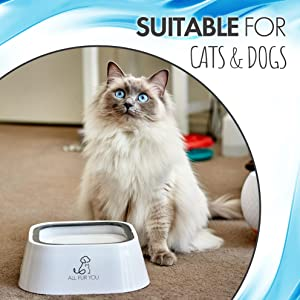 For cats too water bowl