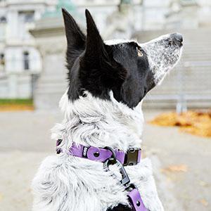 Dog Collar Barkbox