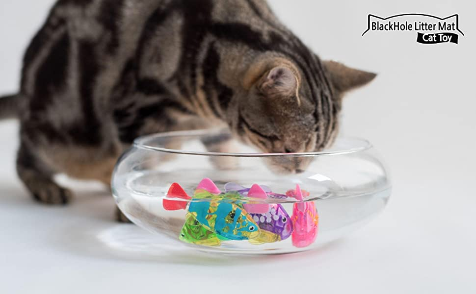 cat drinking water while playing with swimming robot fish cat toy