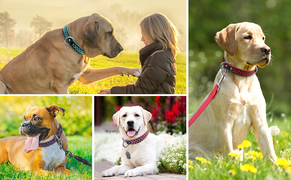 Basic Dog Collars