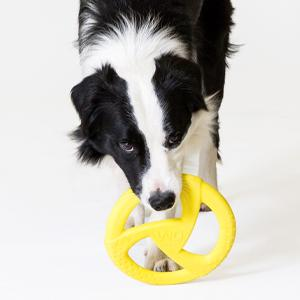 Dog with WO yellow disc
