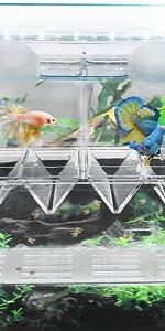 Fish Breeding Box