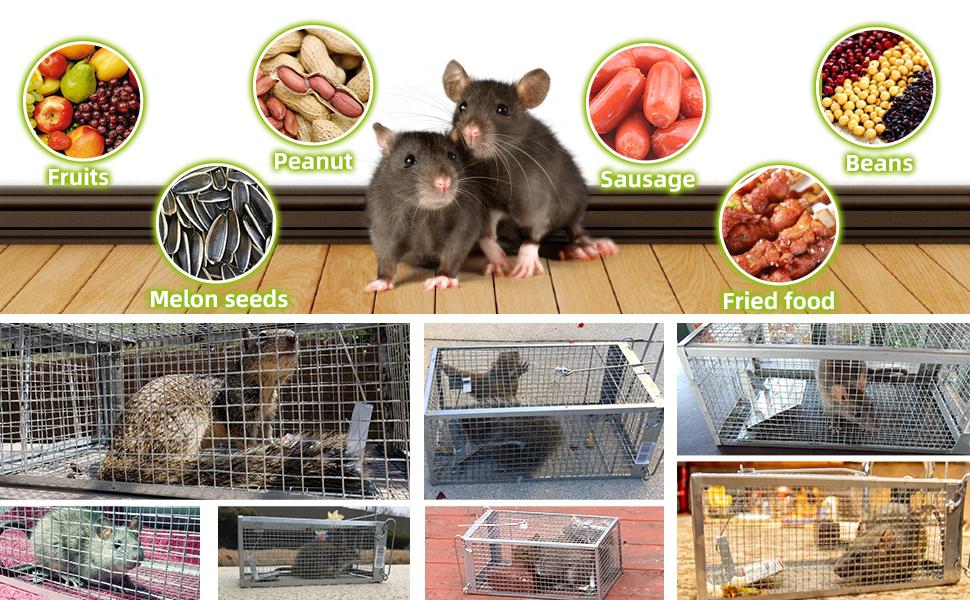 Kensizer rat trap