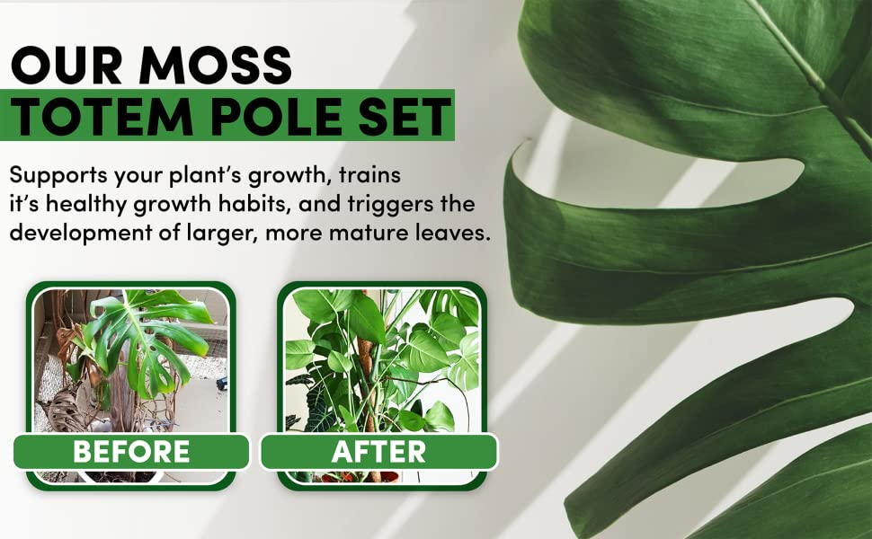 plant stakes for outdoor plants