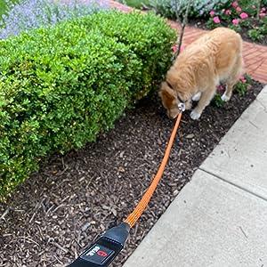 Orange Climbing Rope Dog Leash