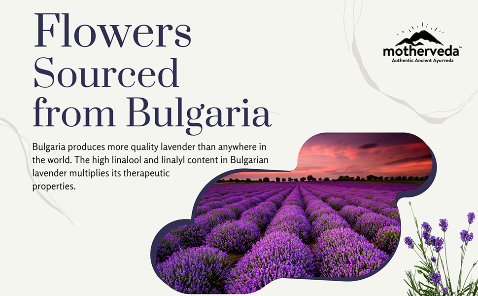 Motherveda Lavender Essential Oil