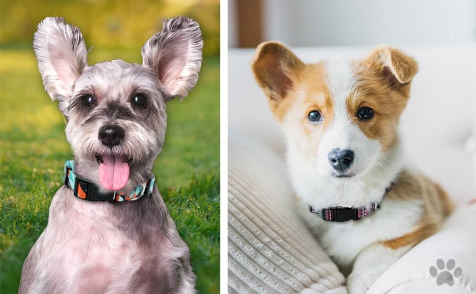 cozilanz dog collar make your dog more attractive in spring and summer