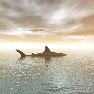 Shark, Discovery SharkWeek
