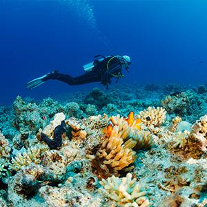 Dive3