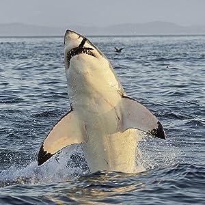 SharkWeek, Discovery SharkWeek, Shark