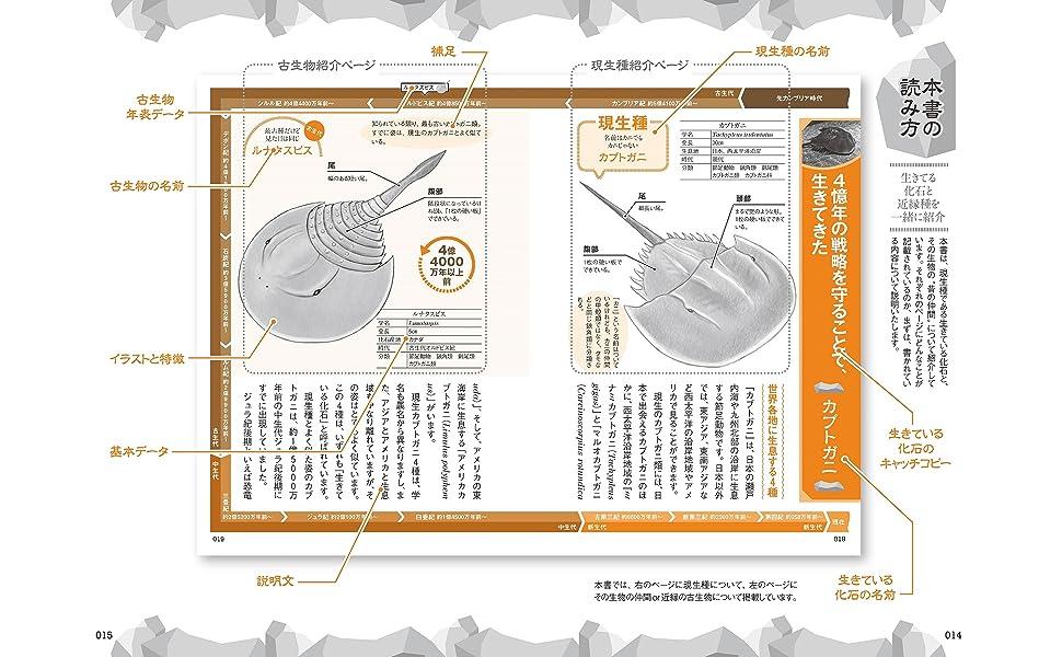 生きている化石図鑑