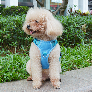 dog harness for small dogs no pull