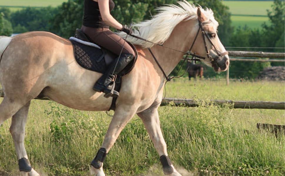 Horse Leg Protector