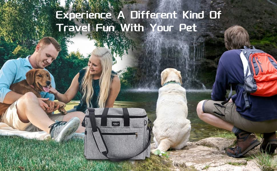 Experience A Different Kind Of Travel Fun With Your Pet