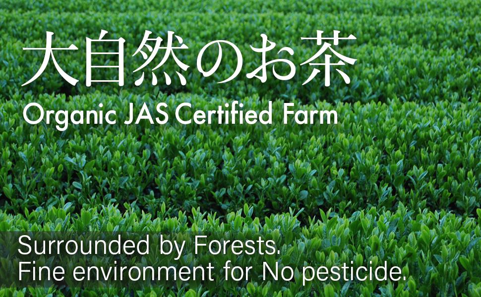 Japanese organic tea from JAS certified farm