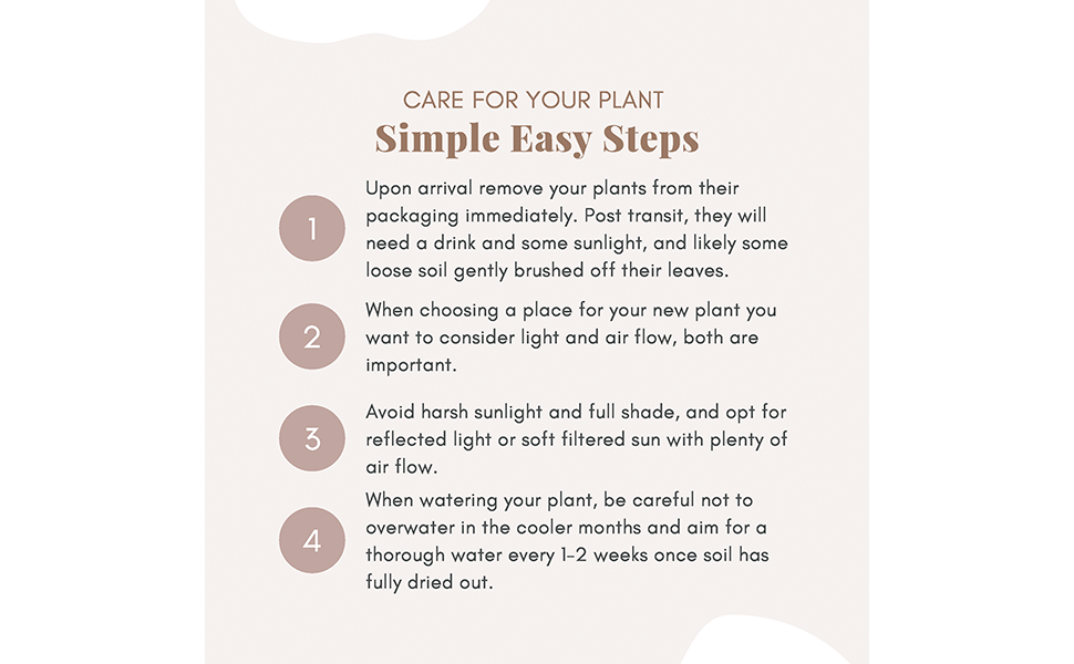 care steps for plants