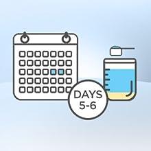 Days 5-6