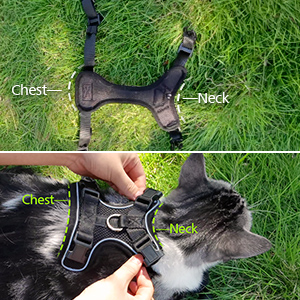 kitten leash and harness set