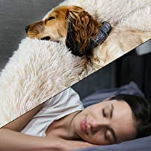 Dog Calming For Sleep