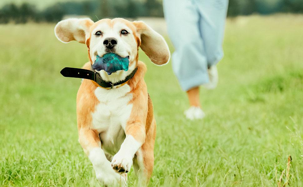 tough dog toys