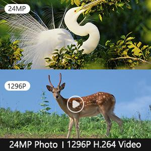 24MP Sharp Image and 1296 HD Video