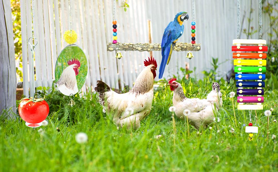 coop chicken toys