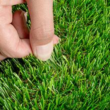 Firm grass