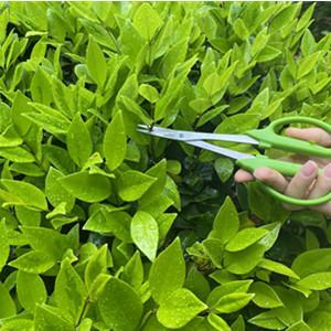 The bonsai scissors is ergonomically designed. The handle has excellent non-slip properties,