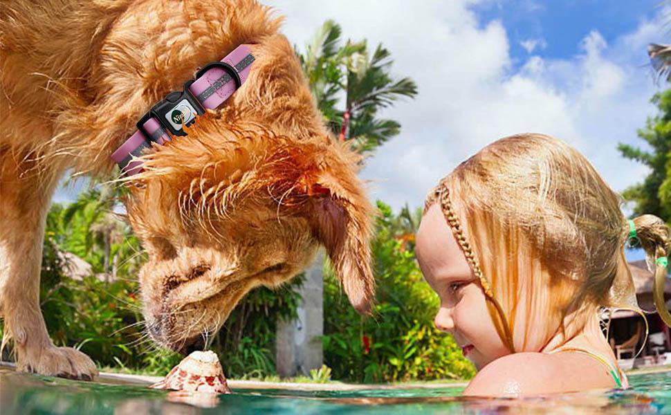Dog collar waterproof