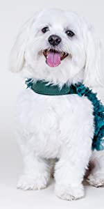 character high quality formal wedding parties argyle paisley items plain boutique schnauzer tails