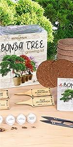 Bonsai Tree Growing Starter Kit