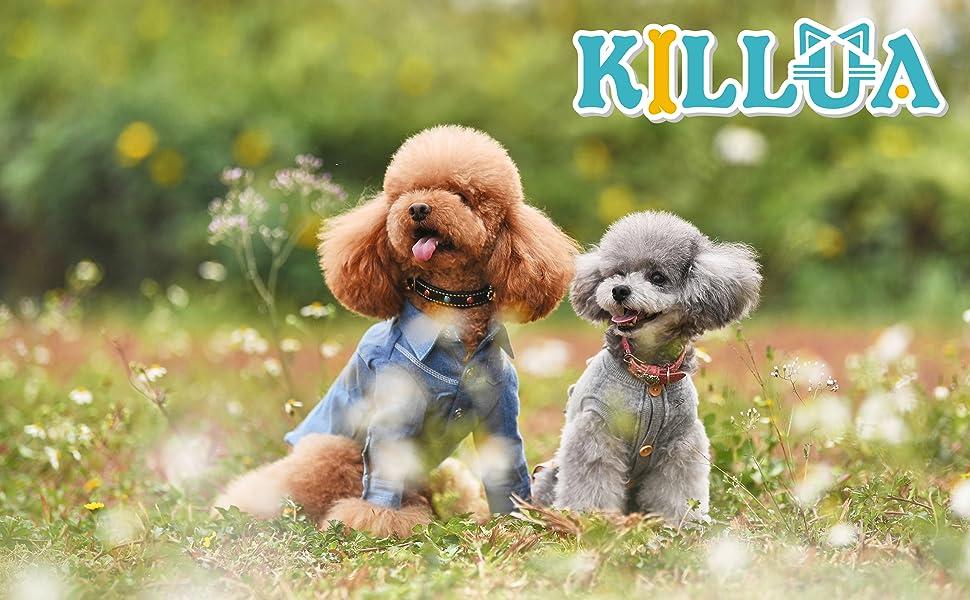 KILLUA pet clothes