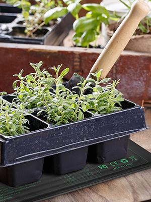 garden seed heat mat