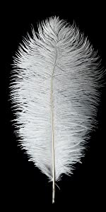 24pcs Natural White Ostrich Feathers 10-12inch