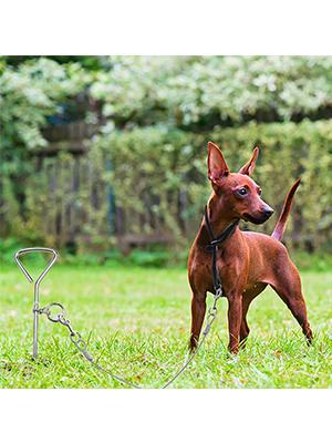 dog yard collar
