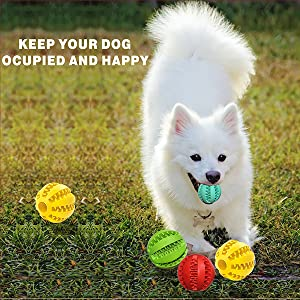 Dogs playing outdoors, chasing toy balls
