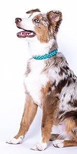 "colly southwest preppy show dog safe burgundy fleece modern aztec elizabethan 10 12 14 inch 10"" 12"""