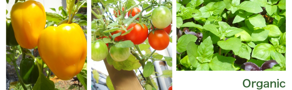 夏も元気に~植物の夏バテ予防に・・・