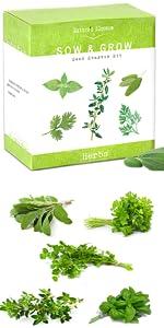 5 Herbs