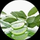 9 Botanical Extracts