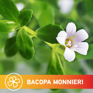 white, succulent and oblong bacopa monnieri