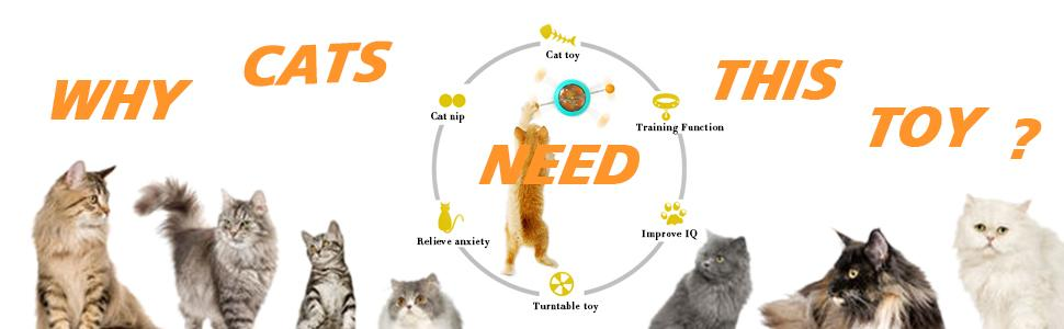 Why cats need this toy
