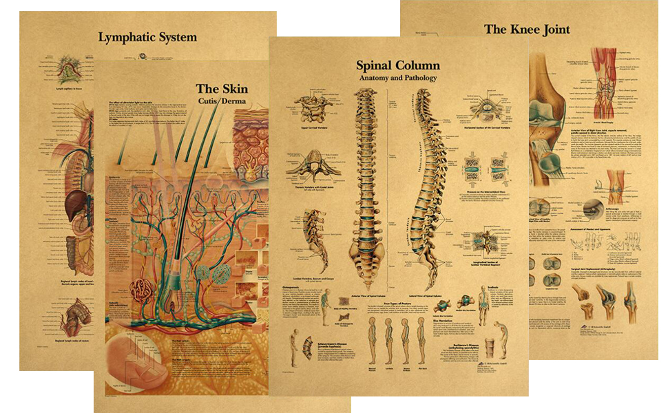 Human Anatomical Poster Set