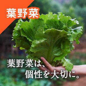 葉野菜は個性を大切にした製法